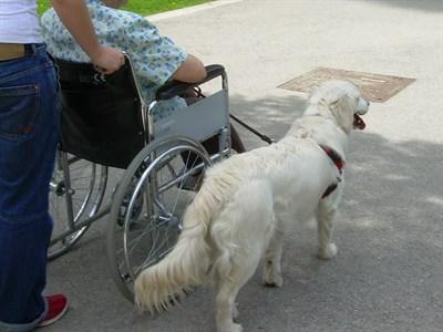 18.09.05 OHL S Apuesta Terapia Animales Bienestar Dependientes